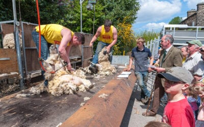 Documentary photography: Sheep shearing at the Hanging Gate, Diggle