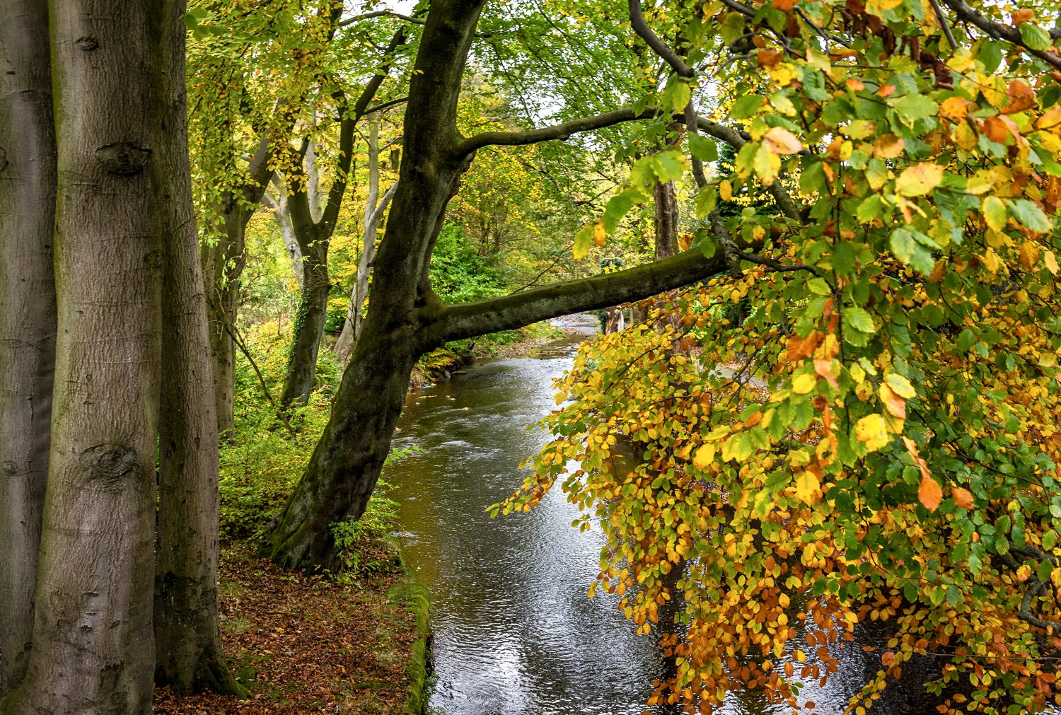 autumn trees landscape photography stuart coleman