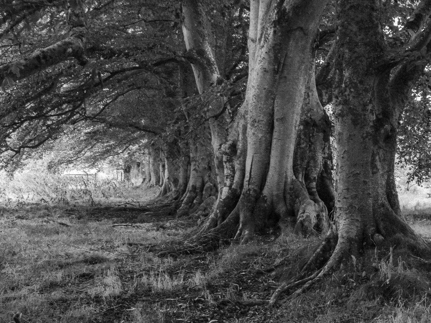 trees inverin landscape photography stuart coleman