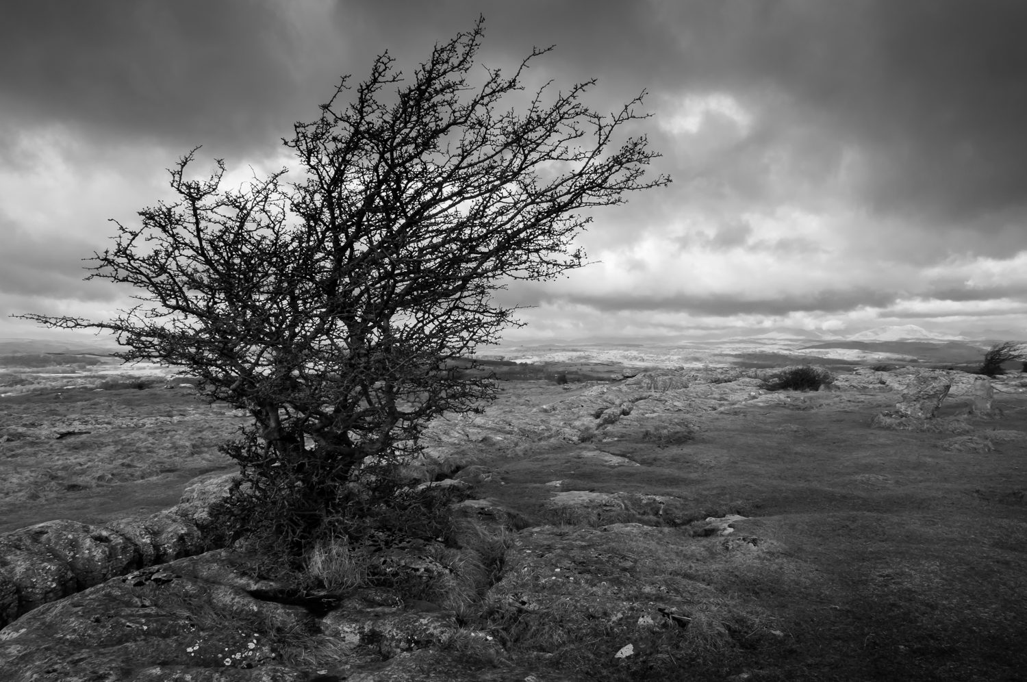 tree south lakes landscape photography stuart coleman