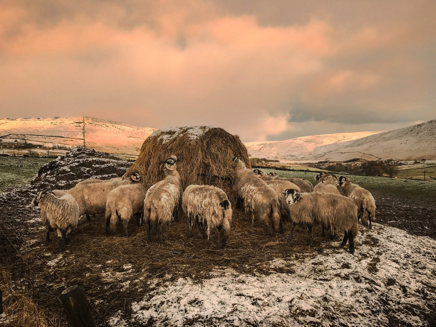 sheep sunset landscape photography stuart coleman